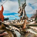 Какую рыбу поесть в Калининграде