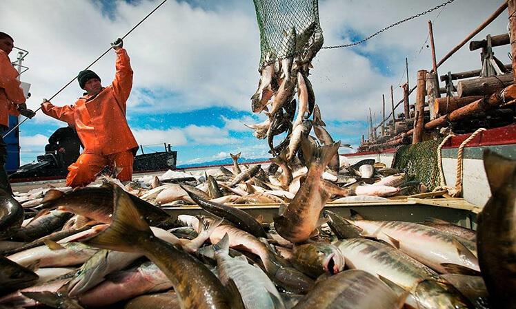 Какую рыбу едят в Калининграде