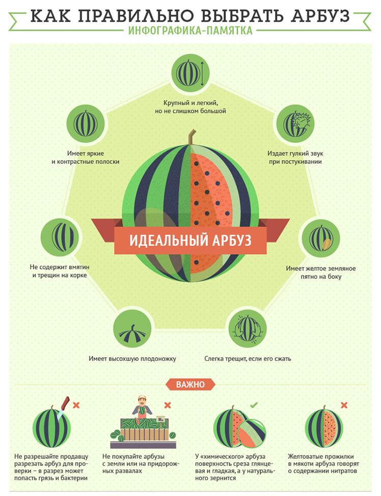 Как правильно выбрать арбуз, инфографика