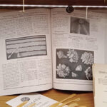 Разворот книги – инструкция, как делать цветы из марципана